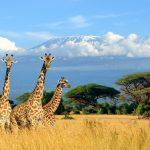 Oplev eventyret i Afrika